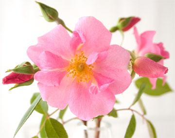 Ar-pink5