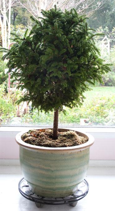 Ch-tree2