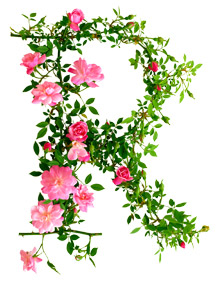 R-is-for-Rosa-Rouletii