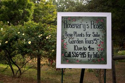 Rosemary's-sign