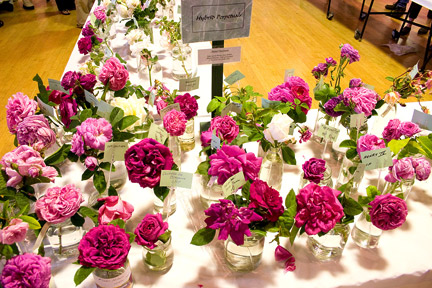Celebration-of-Old-Roses-table