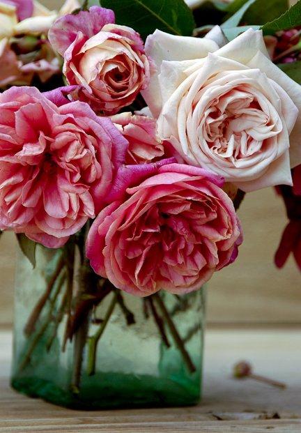 Bouquet_kauri_creek