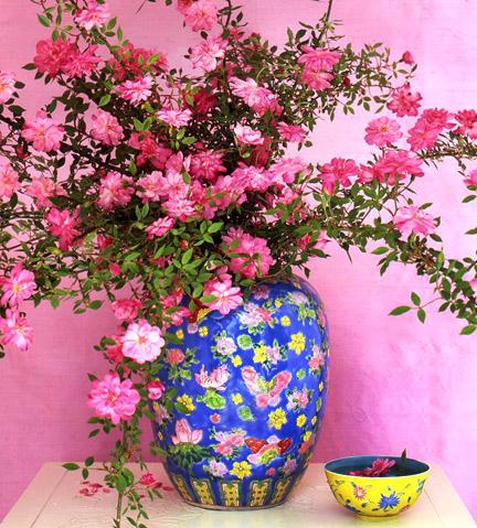 Rouletii-rose-in-ginger-jar
