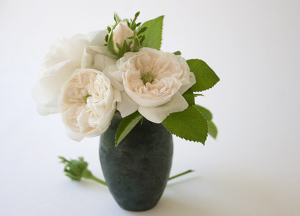 Madame-hardy-in-small-vase