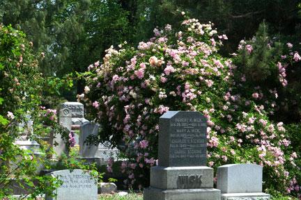 Sacramento-old-city-cemetery-gravesites