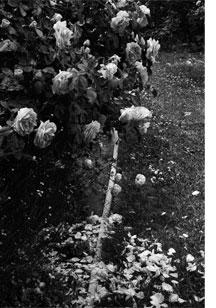 Black-&-white-photo