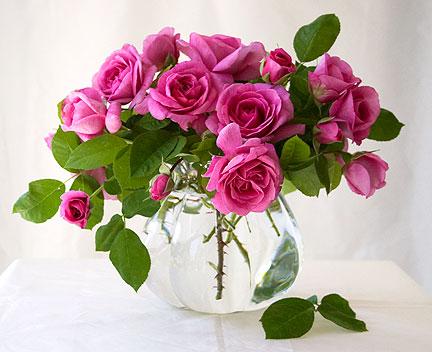 Gertrude-Jekyll-rose-in-glass-vase