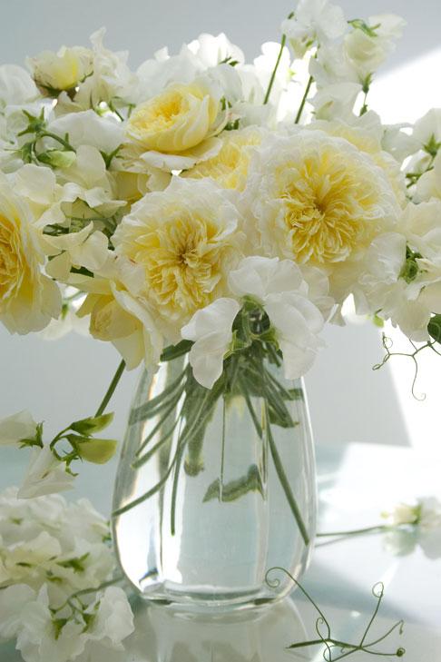 Pilgrim-roses-sweet-peas