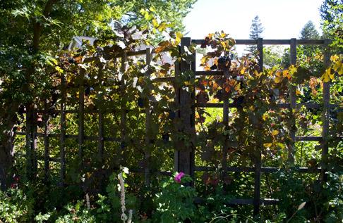 Outside-grape