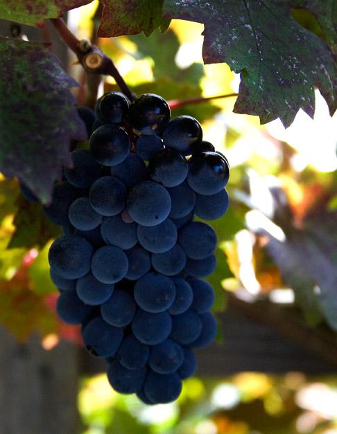 Grape-cluster
