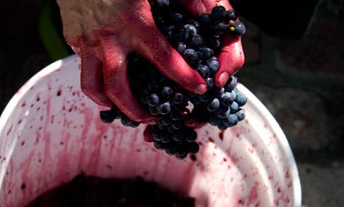 Grape-crushing