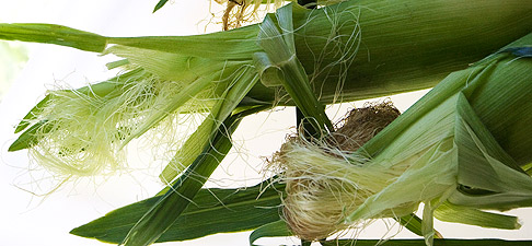 Corn-husks