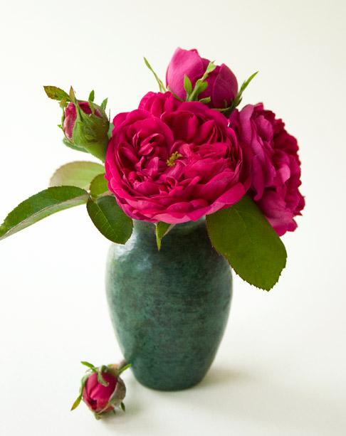 Rose-de-rescht-vase