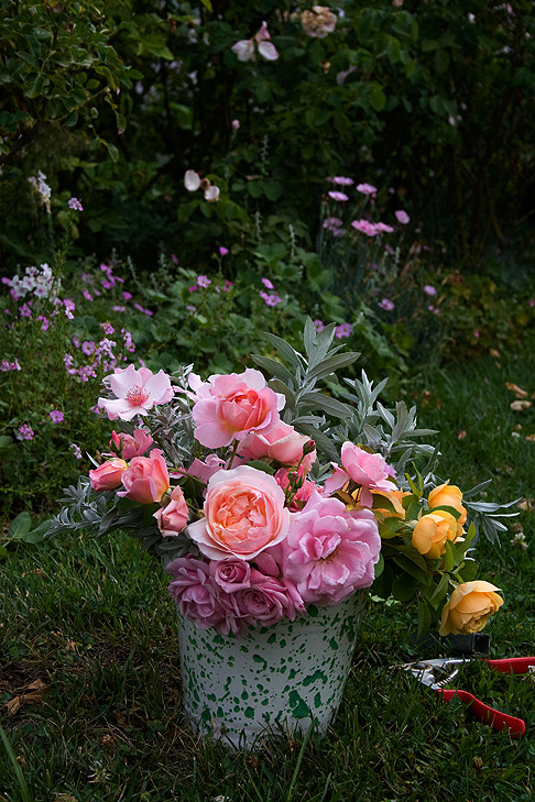 Bucket-of-roses