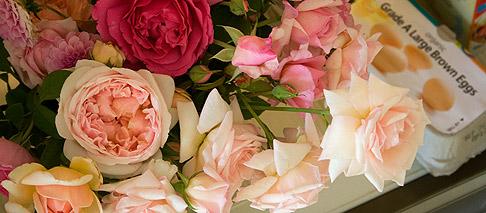 Roses-waiting-in-fridge
