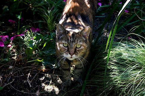 Barbara Worl's cat