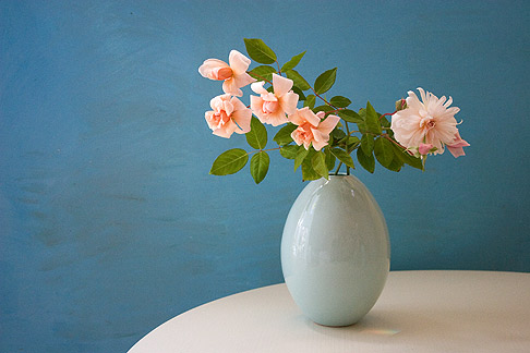 Photo Tips Still Life Backgrounds Roses Rose Notes