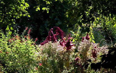 Barbara Worl's back garden