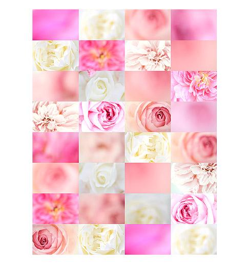 Pink-Rose-Quilt