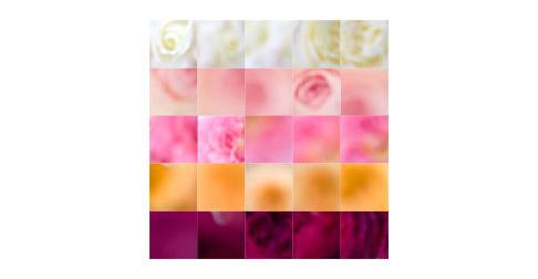 Five-color-rose-grid