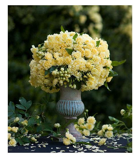 Rosa-Banksia-Lutea-Bouquet