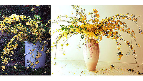 Large-Lady-Banks-Rose-Bouquet