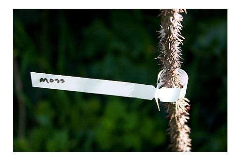 Moss-Rose-Label