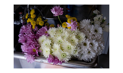 Flowers-Waiting-to-be-Arranged