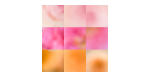 3-rose-color-grid