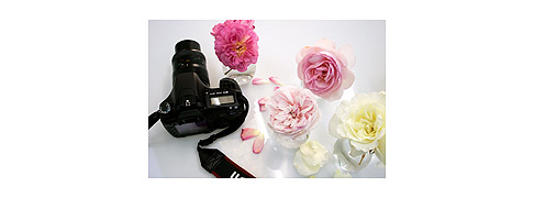 Canon-30D-&-roses