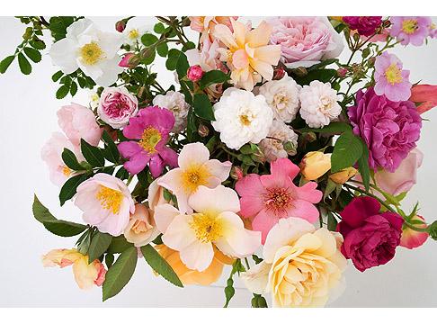 Rose-Diversity