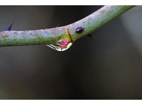 Bud-waterdrop