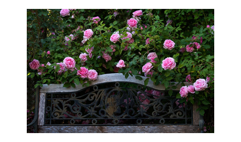 Rose Garden Bench - Rose Notes