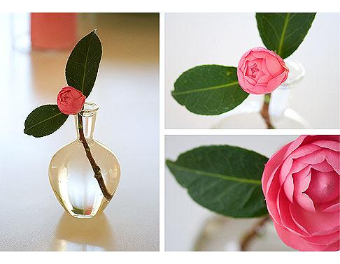Pink-Camellias