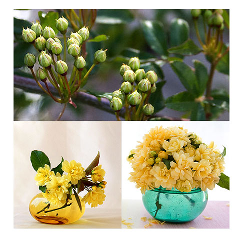 Banksia-Rose-Cluster-Bouquets