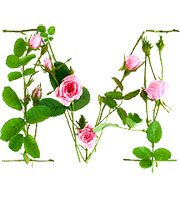 M-is-for-Moss-Rose-1