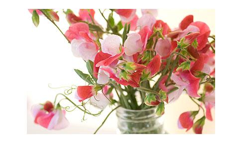 Antique-sweet-peas-in-vase
