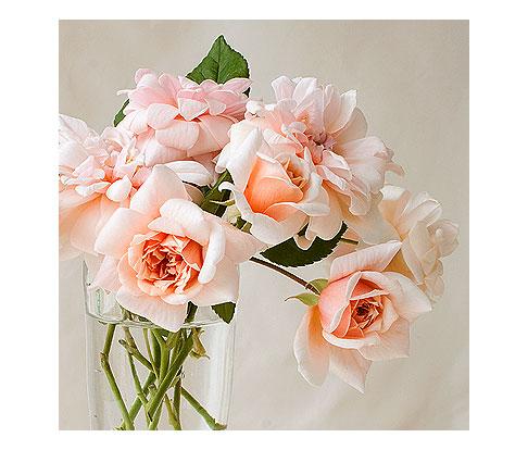 Perle-d'Or-Rose-in-Vase