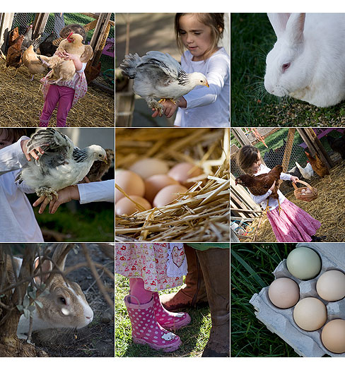 Bunnies,-chickens-and-eggs