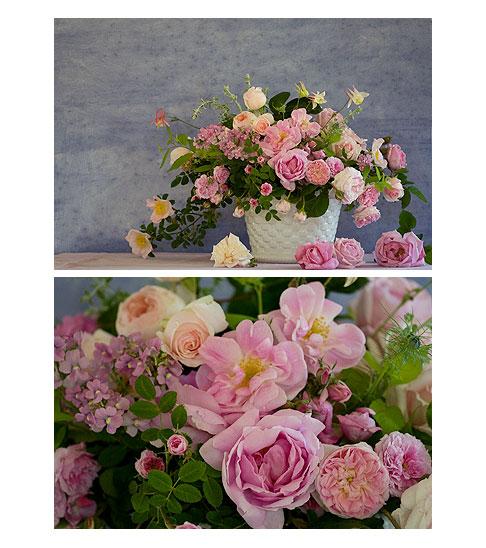Pink-roses-in-white-ceramic-pot