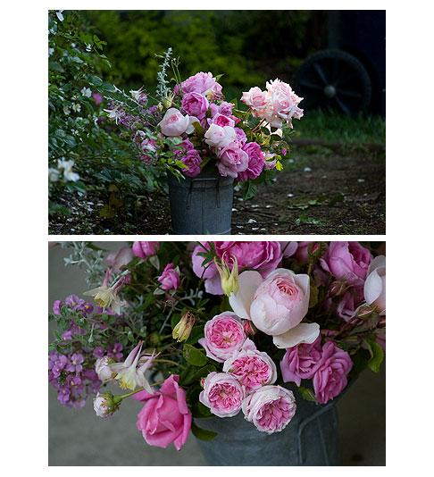 Roses-in-Bucket