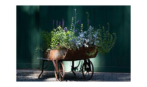 Perennials-for-sale