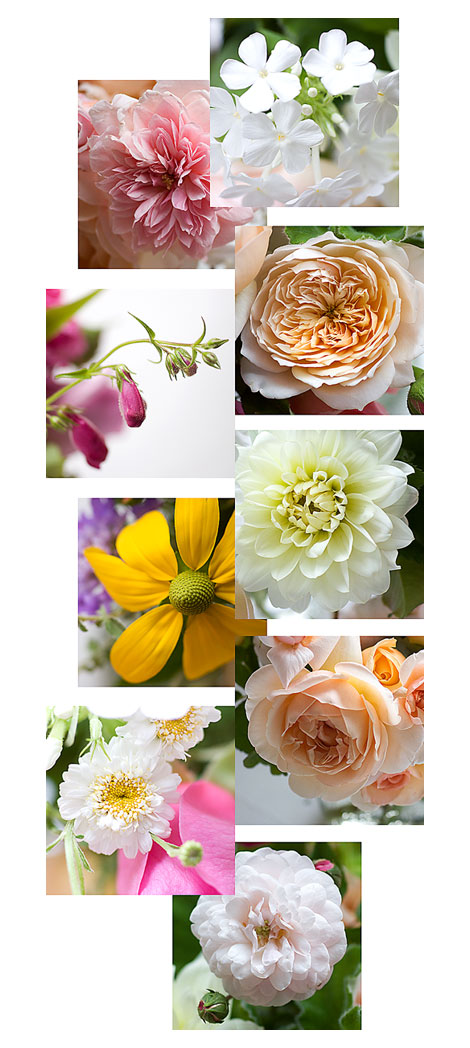 Roses-and-other-Flowers