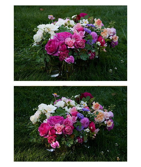 Roses-on-the-Grass