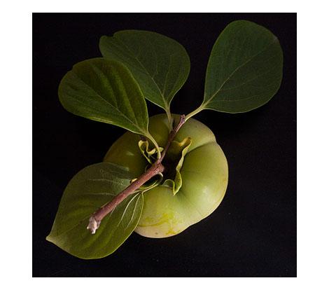 Green-persimmon-1