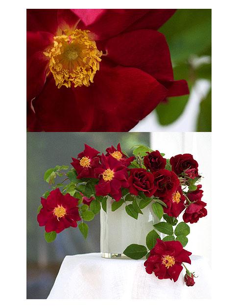 James-Mason-Rose-in-White-Vase