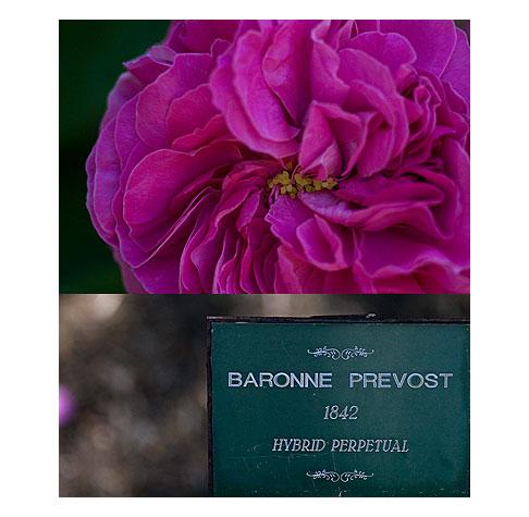 Baronne-Prevost