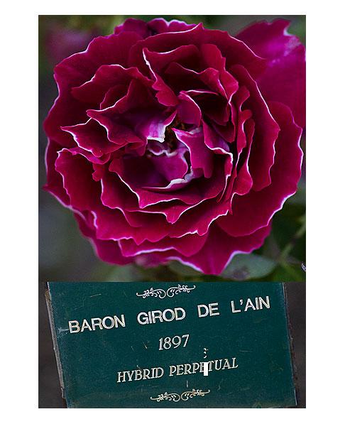 Baroln-Girod-de-L'ain