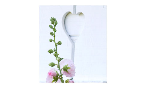 Heart-Shutter-&-Hollyhock