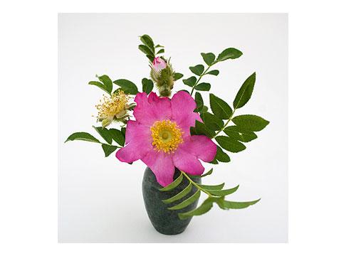 Rosa-Roxburghii-Normalis